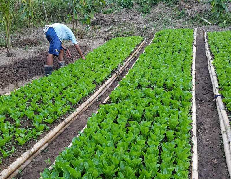 Organic Farm For Sale in Antipolo City | Philippine Retirement Properties
